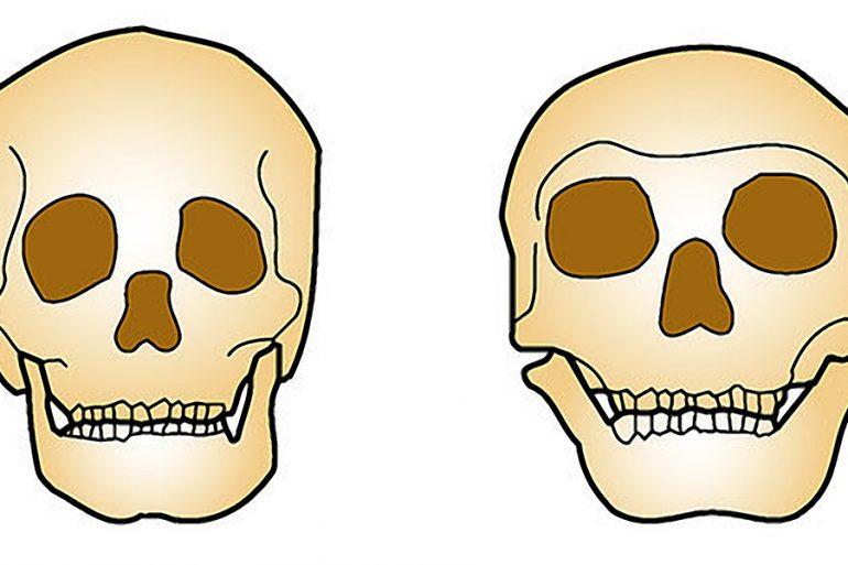 Modern İnsan ve Neanderthal DNA'sının %99.7 si yaklaşık olarak aynı. Homo Neanderthal'in neslinin tükendiği gerçeğinin yanı sıra, iki tür arasındaki farklılıkları tam olarak belirleyebilmek de güç olabilir. Her iki türün de, Avrasya'da yaşadıkları sırada melezlendikleri şeklinde yaygın kabul gören inanç nedeniyle gerçek daha da karmaşıklaşıyor.