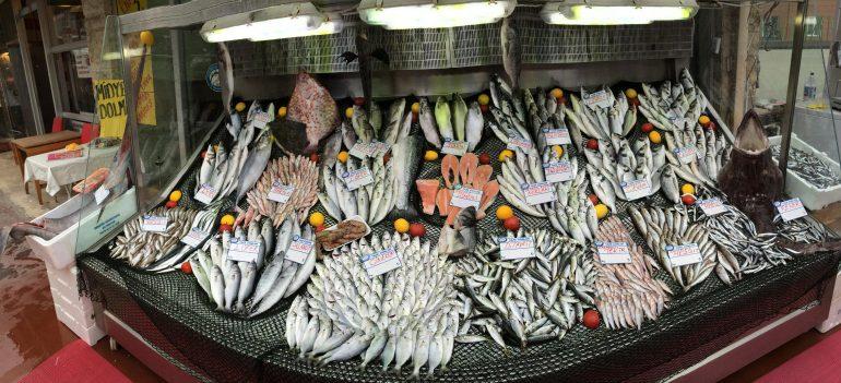 balık çeşidi