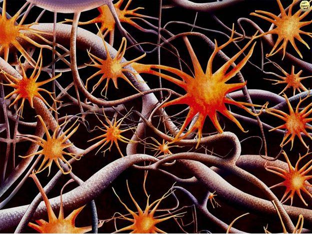 Sinir hücreleri (Nöron)